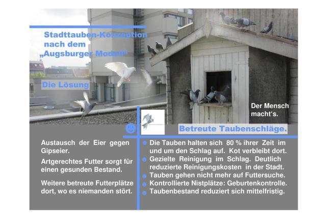 Taubenrettung Taube in Not Taubenschlag